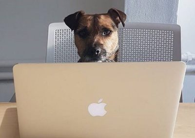 dog_friendly_coworking_office_space_croydon_tmrw